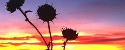 http://www.kkfi.org/wp-content/uploads/Kansas-sunrise-wpcf_250x100.jpg
