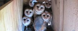 http://www.kkfi.org/wp-content/uploads/barn-owl-hootenanny-4-wpcf_250x100.jpg