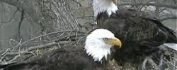 http://www.kkfi.org/wp-content/uploads/eagles1-wpcf_250x100.jpg