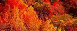 http://www.kkfi.org/wp-content/uploads/fall_foliage_TEMP0465-wpcf_250x100.jpg