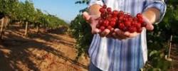 http://www.kkfi.org/wp-content/uploads/foodsov-wpcf_250x100.jpg
