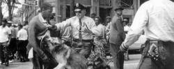 http://www.kkfi.org/wp-content/uploads/freedom-now-02-birmingham-dogs-attacking-on-street-wpcf_250x100.jpg