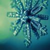 http://www.kkfi.org/wp-content/uploads/holiday-2014.jpg