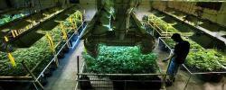 http://www.kkfi.org/wp-content/uploads/medicalmarijuana2-wpcf_250x100.jpg