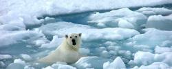 http://www.kkfi.org/wp-content/uploads/polar-bears13-wpcf_250x100.jpg